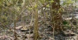 വടാപ്പാറയിലെ തീപിടുത്തത്തിന്റെ കാരണം തേടി ഡി.എഫ്.ഒ