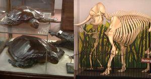 മൂവായിരത്തിയഞ്ഞൂറോളം ജീവികളുടെ പ്രത്യേകതകൾ കാണാം; തേവര കോളജിൽ എക്സപോ