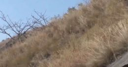 കാട്ടുതീ ഭീതിയില് ഹൈറേഞ്ച് മേഖല; ഉടുമ്പഞ്ചോലയിൽ ജാഗ്രത നിർദേശം