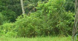 അപകട ഭീഷണി ഉയർത്തി വൈദ്യുതി കമ്പികൾ; അവഗണിച്ച് കെഎസ്ഇബി