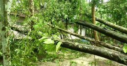 കാറ്റ് തറപറ്റിച്ച് വൻമരങ്ങൾ; ടിവി പുരത്തെ നഷ്ടകണക്ക്