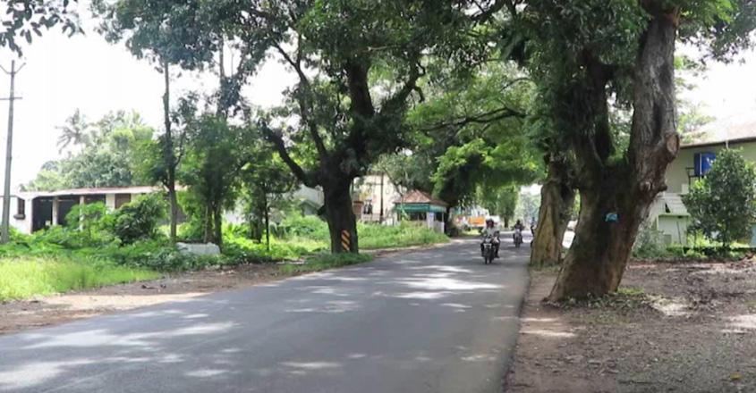 treeskattachira-01