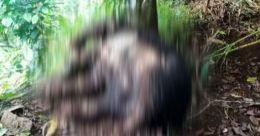വണ്ടിപ്പെരിയാറിൽ കരടി ചത്ത നിലയില്; അന്വേഷണം
