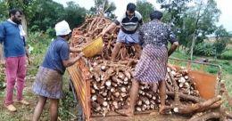 250 ടൺ കപ്പ സൗജന്യമായി നൽകി സിനിൽ; കോവിഡ് കാലത്തെ നല്ല മാതൃക