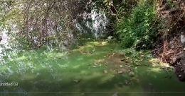 ചാലിയാറിന് പച്ചനിറം; ബാക്ടീരിയ പടരുന്നതായി റിപ്പോർട്ട്