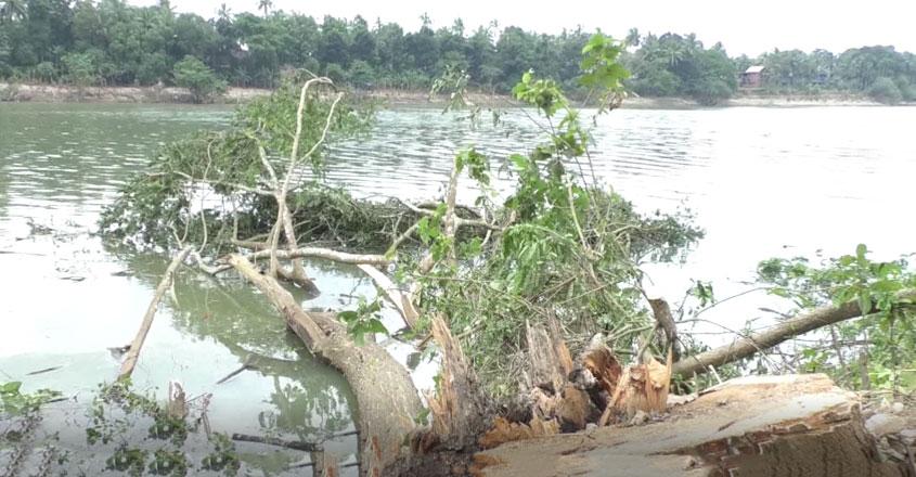 chaliyar-trees