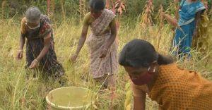 അട്ടപ്പാടിയില് കുടുംബശ്രീയുടെ ഭക്ഷ്യവനം പദ്ധതി വിജയകരം