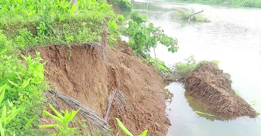 banks-of-the-kuttyadi-river-are-collapsing