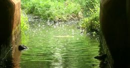 റയില്വേ അടിപ്പാതയില് മലിനജലം; അരക്കിണറിൽ പ്രതിഷേധം