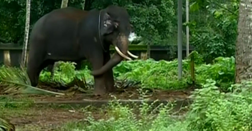 thiruvalla-elephant