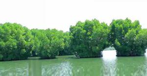 പ്രളയക്കെടുതിയിൽ നിന്ന് കരകയറി മൺറോ തുരുത്ത്