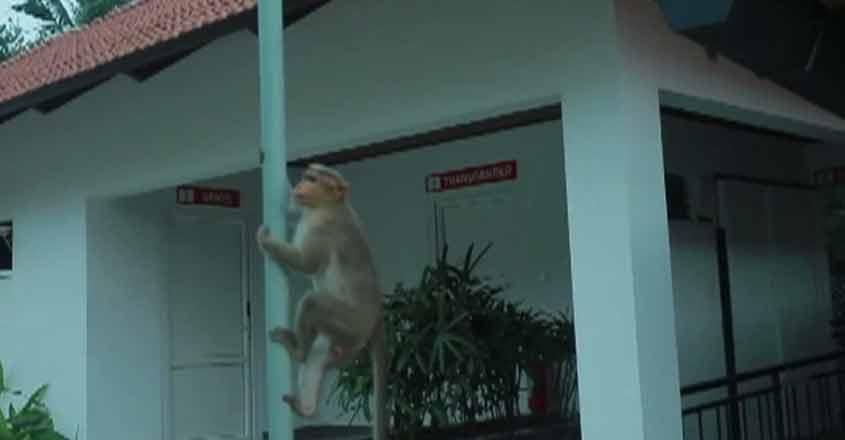 monkeywb