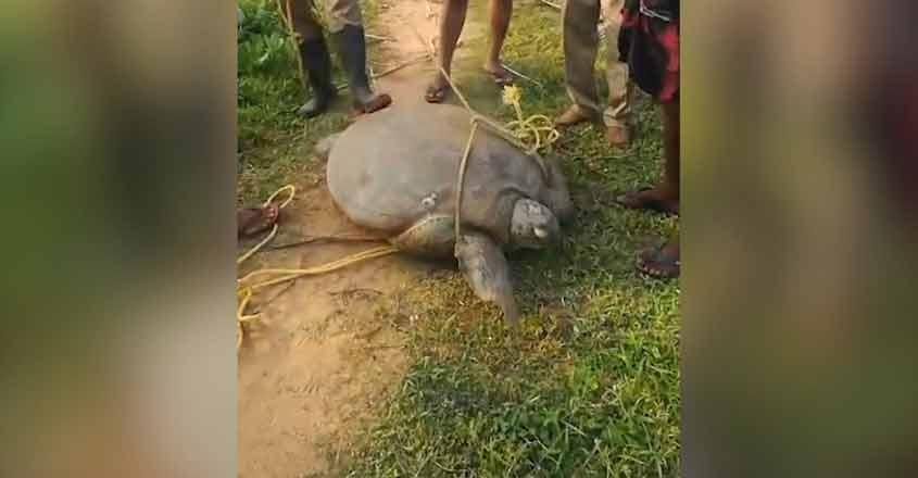 tortoisewb