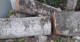 മുറിച്ചിട്ട ആഞ്ഞിലി തടി ഡിവൈഎഫ്ഐക്കാർ കടത്തിയതായി ആക്ഷേപം