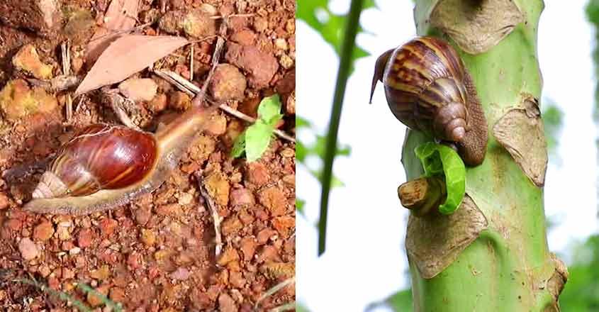 snail-money-kollam
