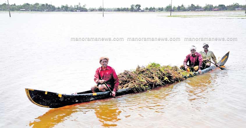 flood-kuttanadu-file-photo