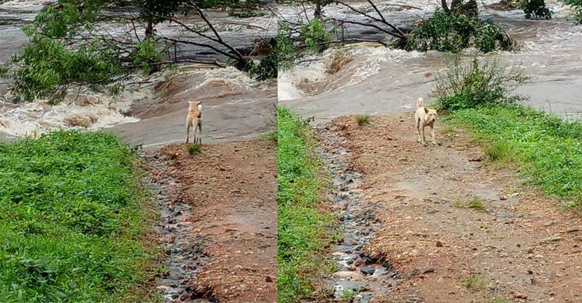flood-dog