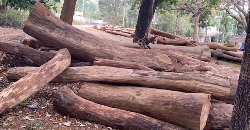 tree-cut-dfo