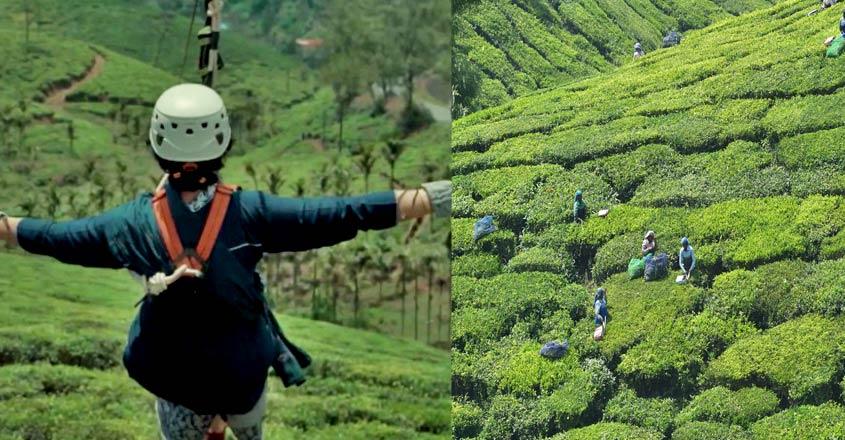 tea-tourism