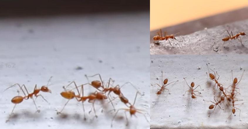 ant-short-film