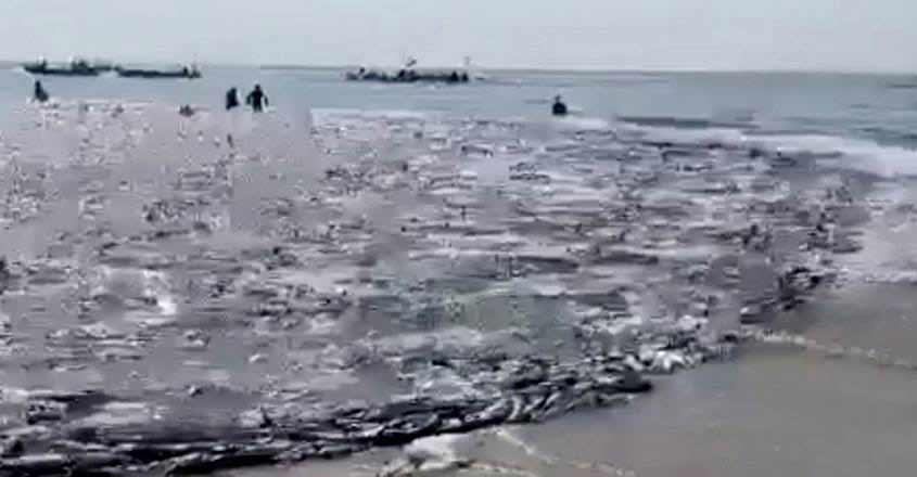 uae-fish-viral-video