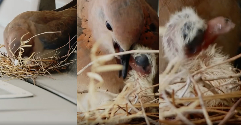 bird.jpg2