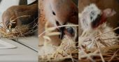 ഷെയ്ഖ് ഹംദാന്റെ കരുതൽ; 'വിലയേറിയ' കൂട്ടിൽ കിളിക്കുഞ്ഞ് പിറന്നു; വിഡിയോ