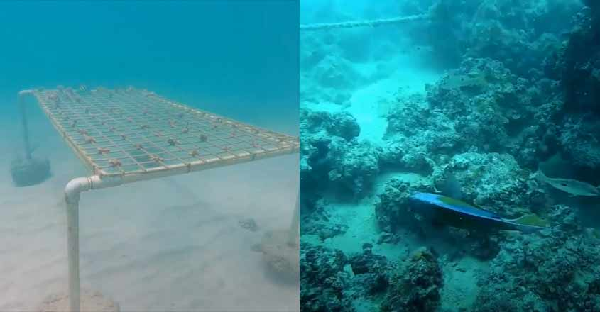 abudhabi-corals