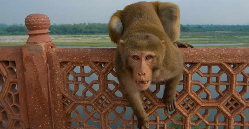 monkey-up-child