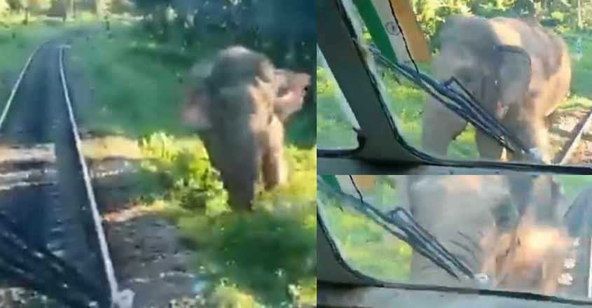 elephant-train-video
