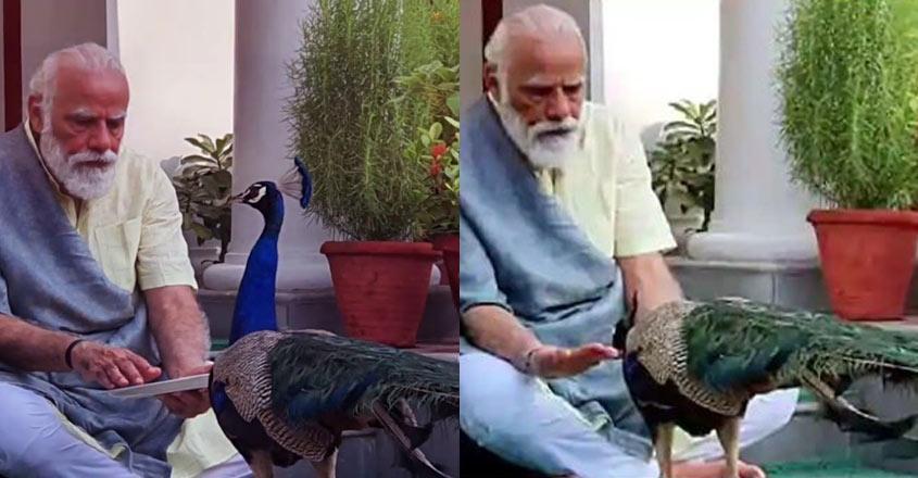 modi-feeding-peacock