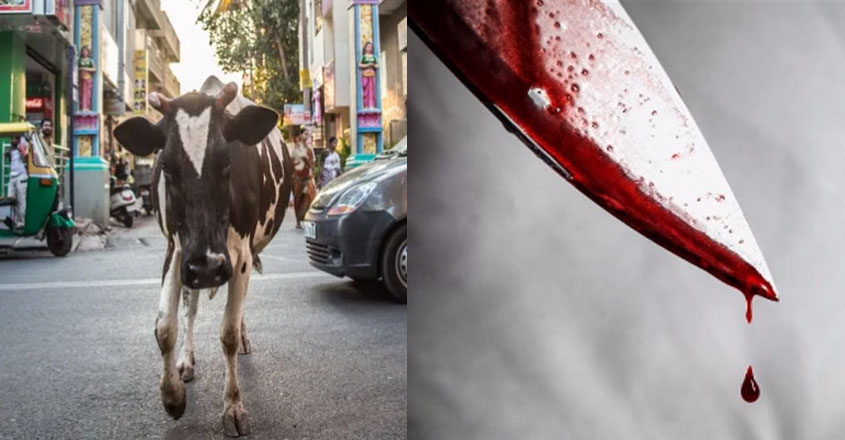 cow-blood