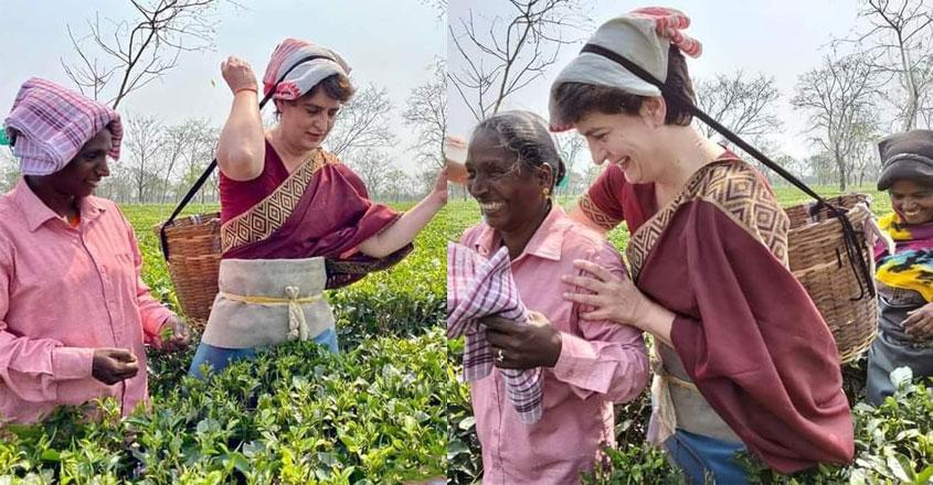 priyanka-gandhi-plucking-tea-leaves