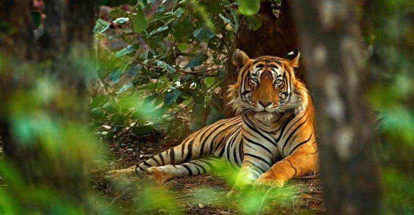 bengal-tiger-journey
