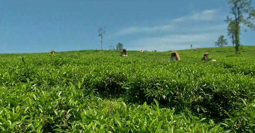 tea-import