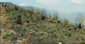 കൊട്ടക്കാമ്പൂർ ഭൂമിവിവാദം തിരഞ്ഞെടുപ്പില് ആയുധമാക്കാൻ കോൺഗ്രസ്