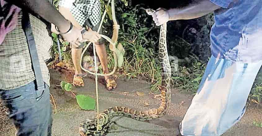 pathanamthitta-snake