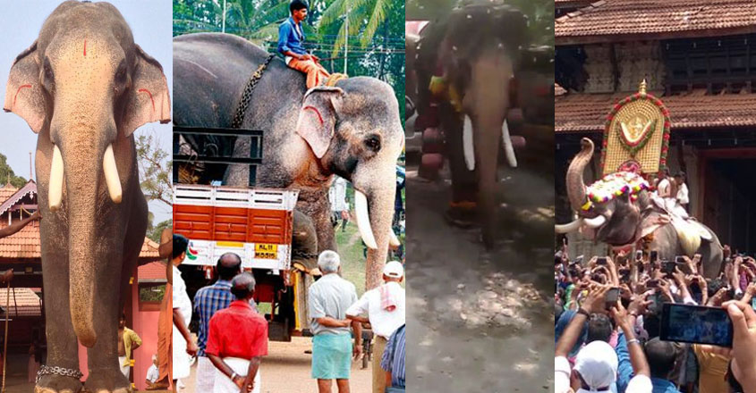 ramachandran-life-elephant