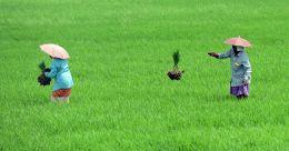 കുട്ടനാട് പാക്കേജിന് 750 കോടി; പച്ചക്കറി ഉല്പാദനത്തിന് 500 കോടി