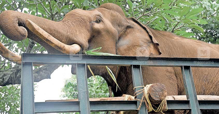 pathanamthitta-elephant