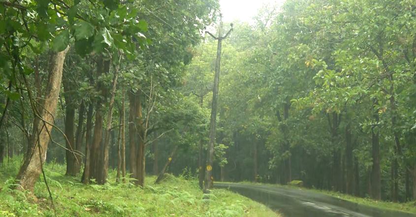 lighforest