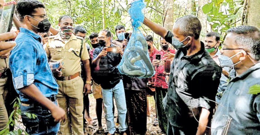 idukki-mankulam-king-cobra-snake.jpg.image.845.440