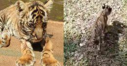 കാടുകാണാനിറങ്ങുന്നു 'മംഗള'; ലക്ഷ്യം ഇരപിടുത്തം; ചെലവ് 50 ലക്ഷം