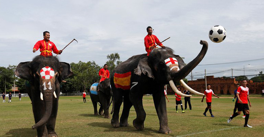 elephant-footbal