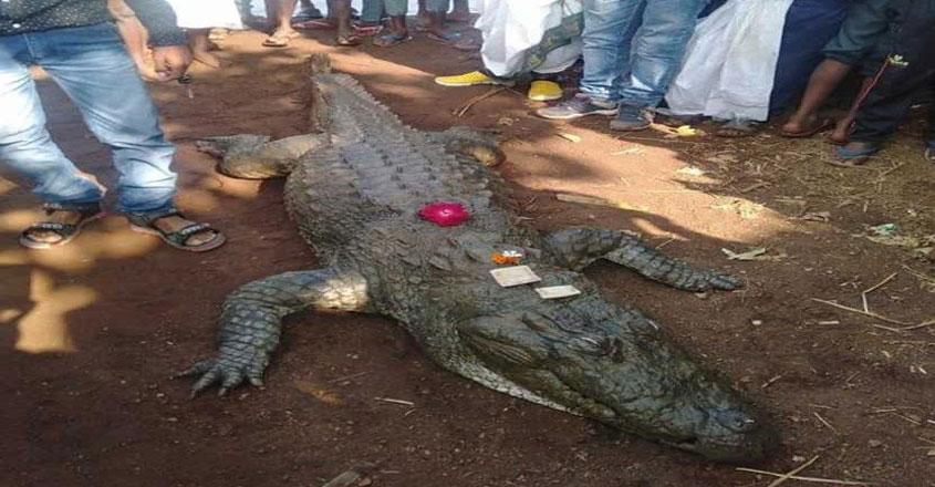 crocodile3