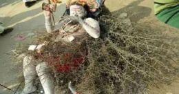 ആ 'വലിയ' പാപം പോകാൻ മുള്ള് കിടക്കയിൽ കിടക്കുന്ന സ്വാമി; കുംഭമേള കാഴ്ച