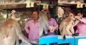മെഡിക്കൽ ഷോപ്പിലെത്തി മുറിവ് കാണിച്ച് മരുന്നുവാങ്ങി കുരങ്ങൻ; വൈറൽ വിഡിയോ