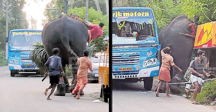 elephant-illickal