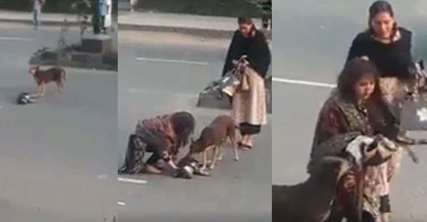 dog-love-road-video