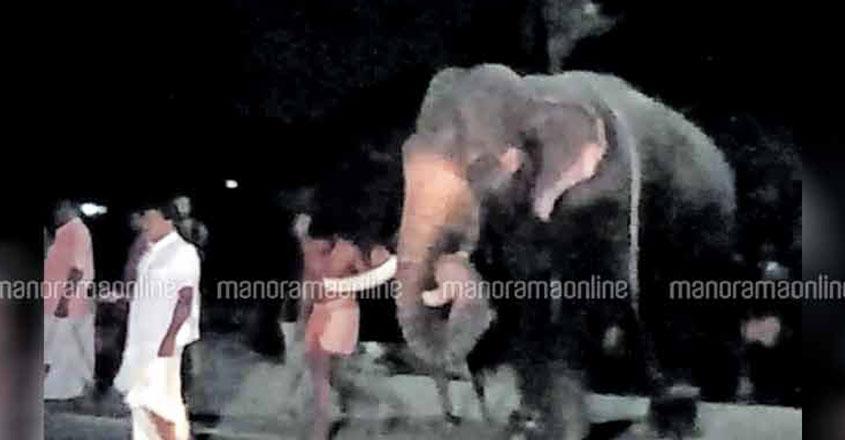 kalamassery-elephant-09